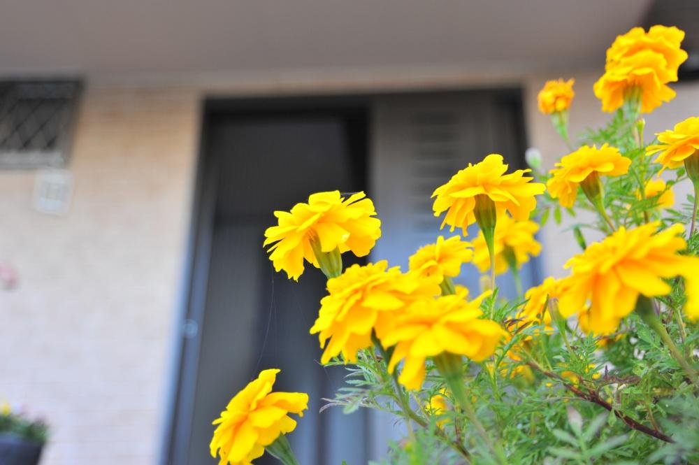 四季折々の草花が歓迎しています